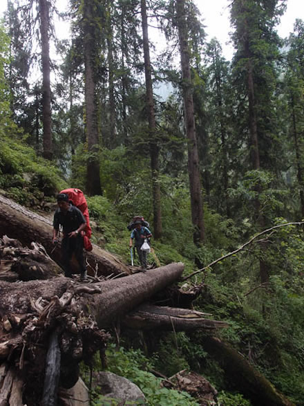 Trekking over fallen trees in the Sorang Valley